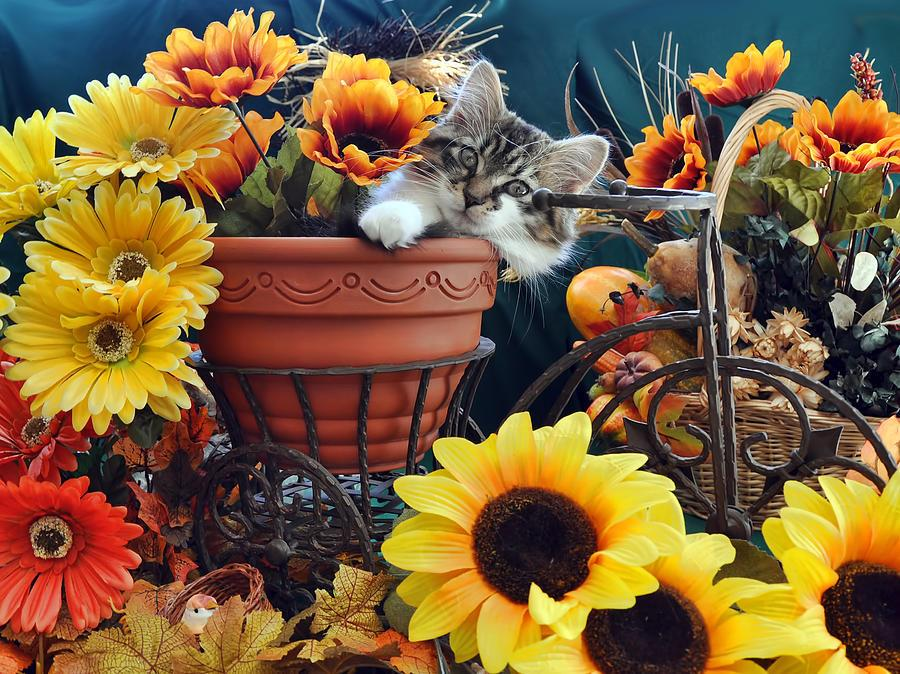 Puppies And Fall Wallpaper Cute Cat Kitten Image In Bicycle Flower