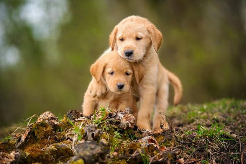 Image result for puppys playing