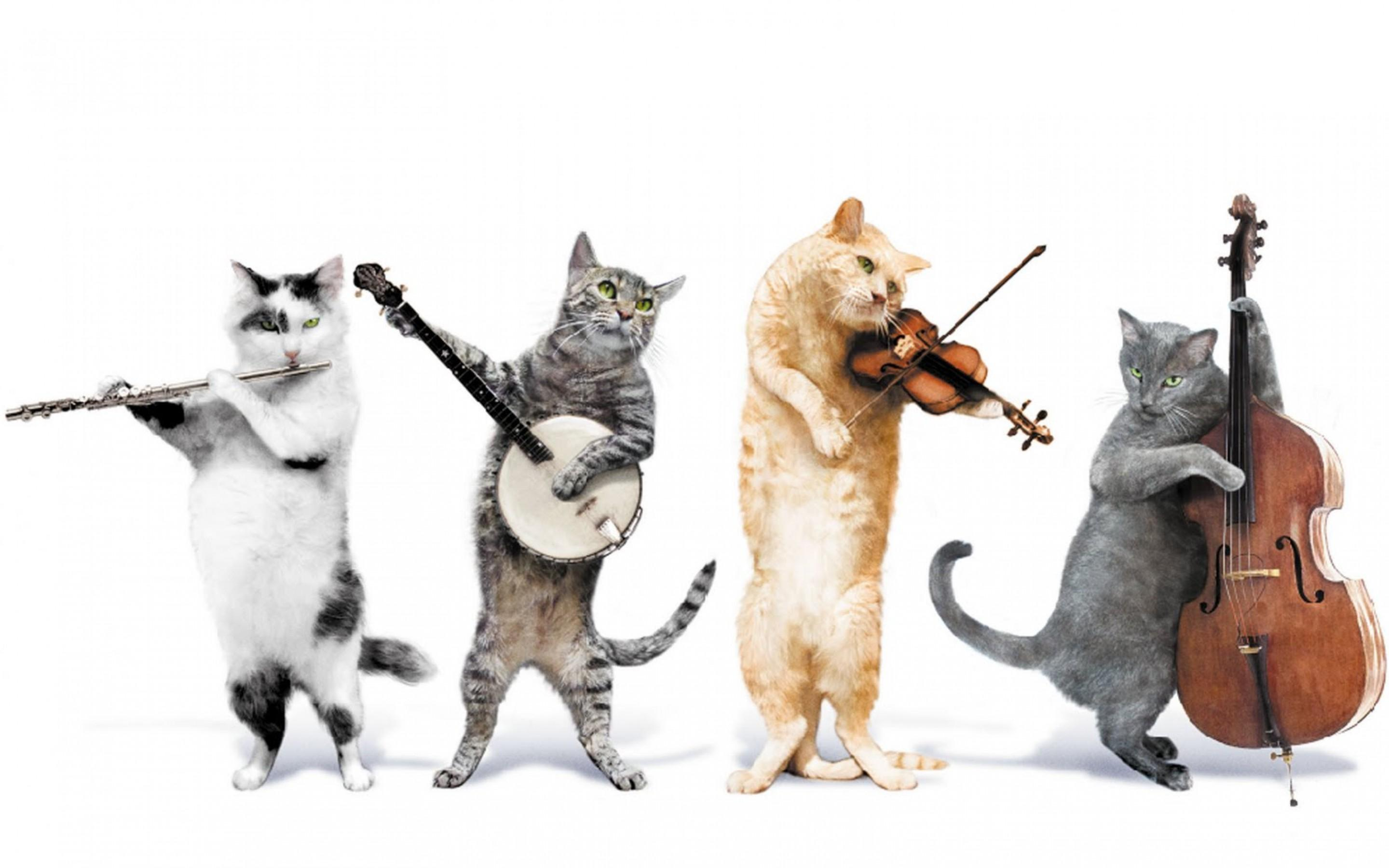 Image result for cat music