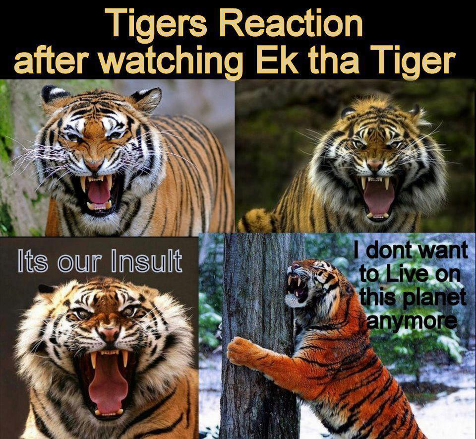 Cute Baby Wallpaper With Quotes In Hindi Funny Pictures Tiger Reaction After Watching Ek Tha Tiger