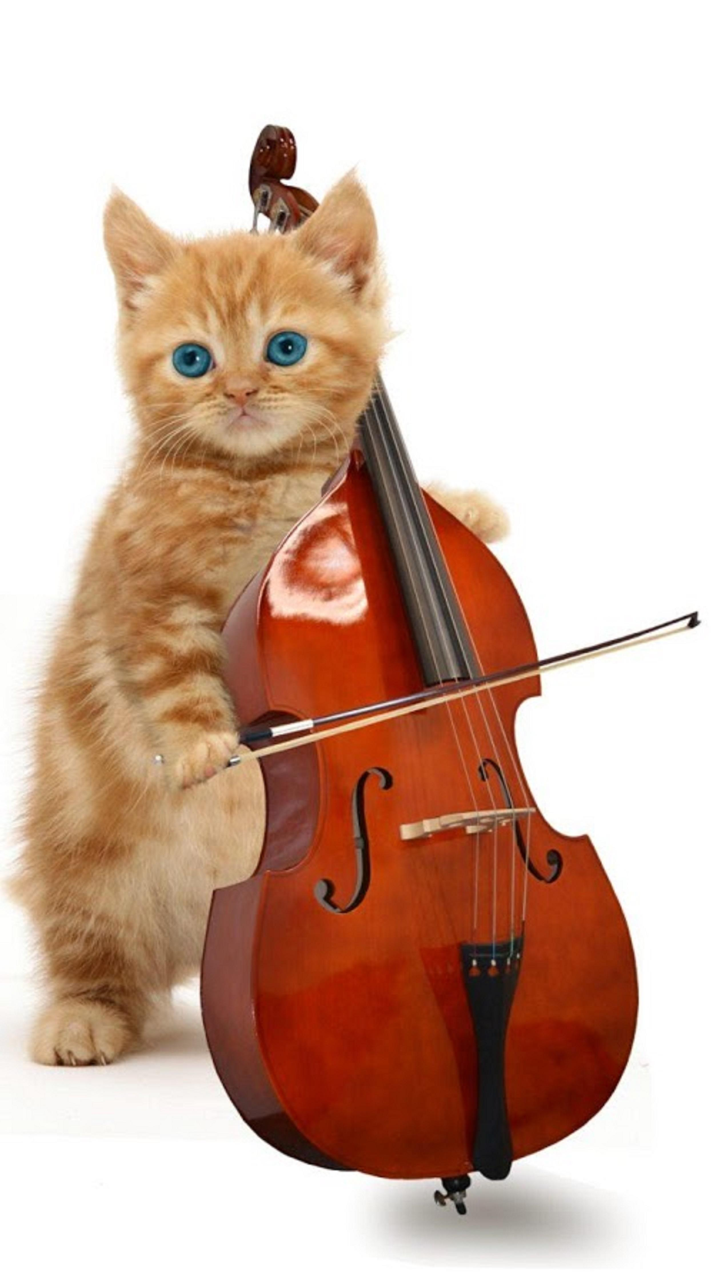 Funny Purring Playing And Talking Cat Music On The