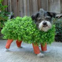 Hilarious Homemade Halloween Costumes for your Dog-1 Chia ...