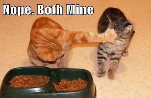 bothmine