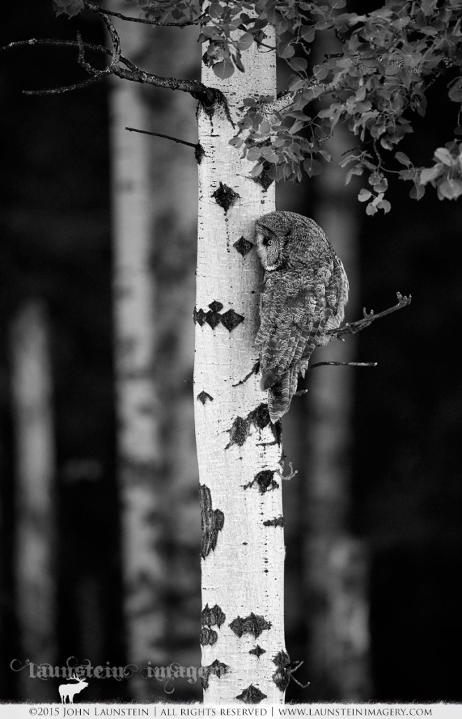 Tattered Hopes In Black And White >> Black White Launstein Imagery The Wildlife Photography Of John