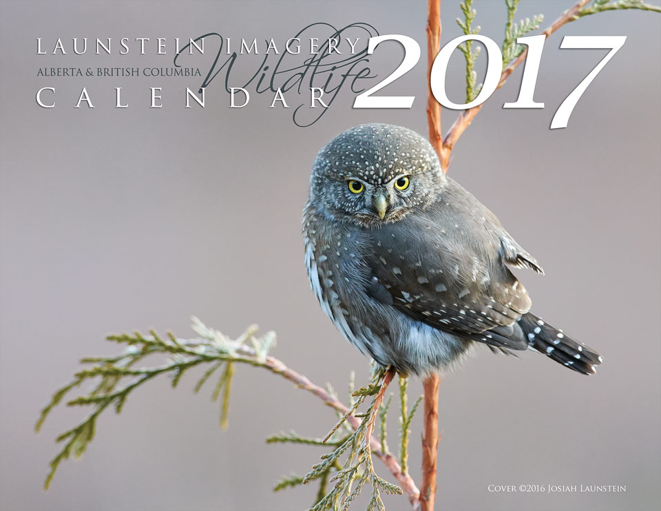 2017 Launstein Imagery Wildlife Calendar