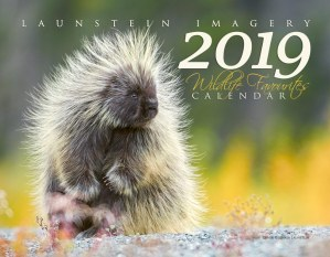 2019 Launstein Imagery Wildlife Favourites Calendar - Front Cover