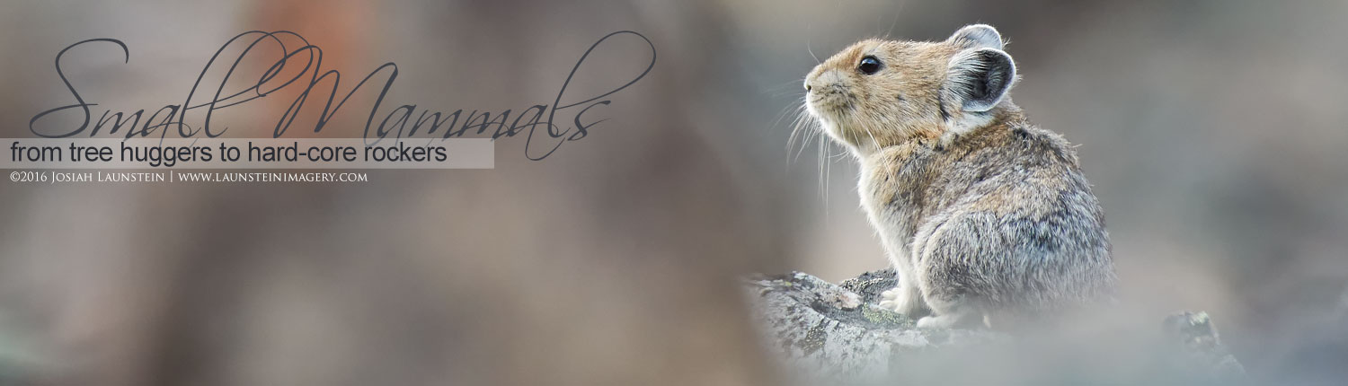 Images of Smaller Mammals by the Launstein Family
