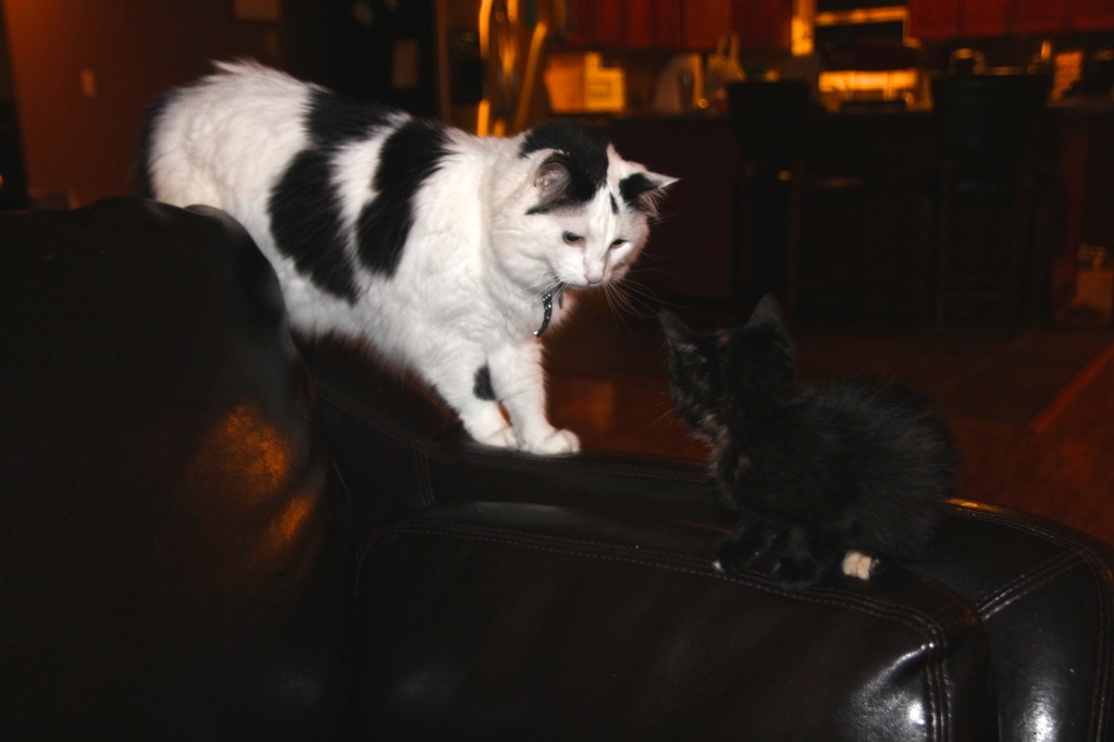 Day 3--Nina meets Sylvie.