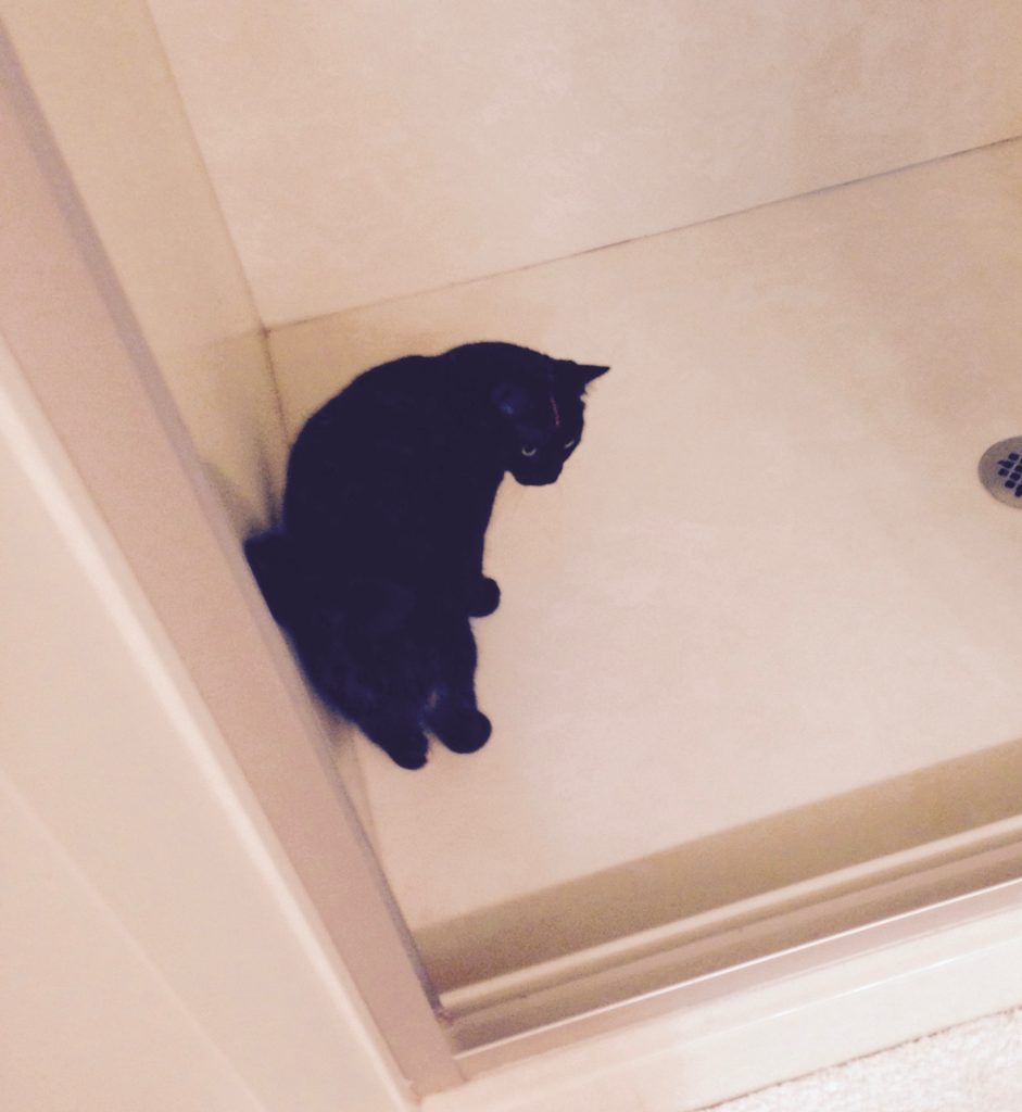 Sylvie, shower cat who hates the water