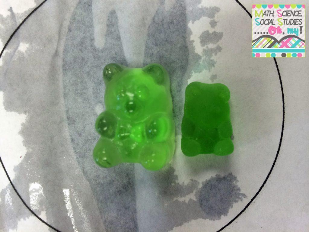 Gummy Bear Experiment Worksheet