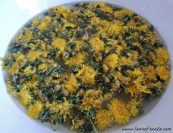 flori-de-papadie-pentru-miere