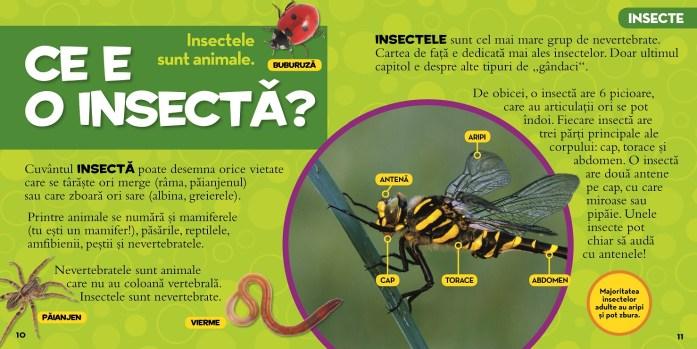 marea-enciclopedie-despre-insecte_1