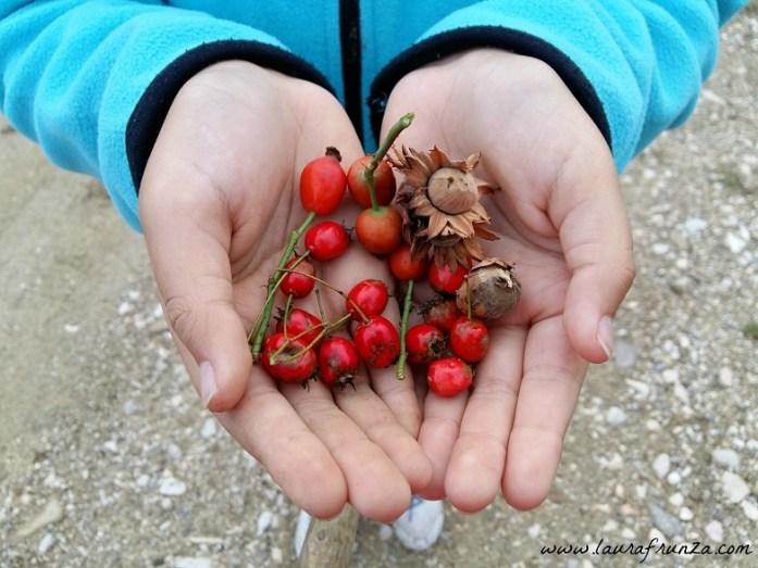 fructe-salbatice-de-toamna