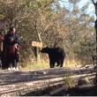 oso intenta atacar a un niño