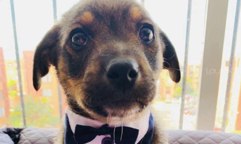 vicente-perrito-adoptado