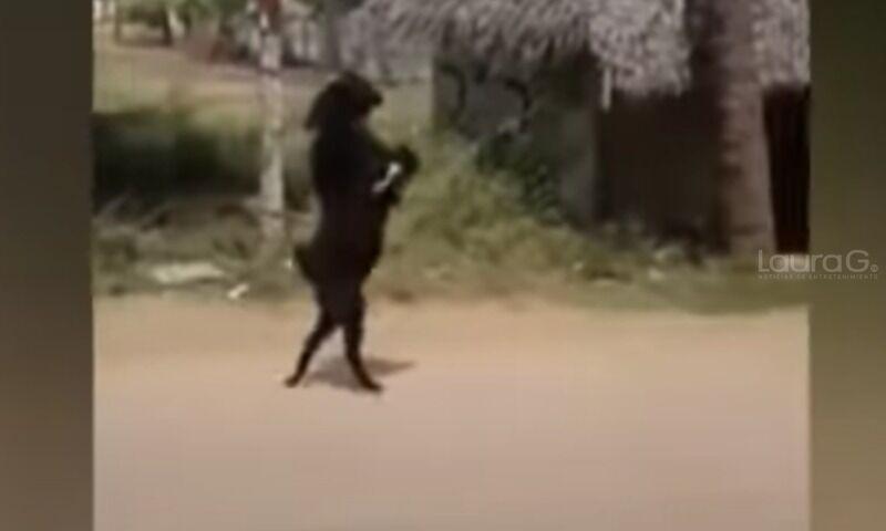 cabra-negra-persona