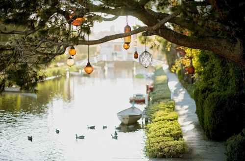 brown pendant lamp hanging on tree near river