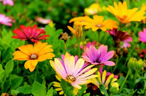 assorted color flowers