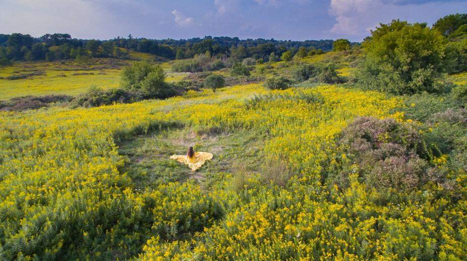Yellow Field of Dreams