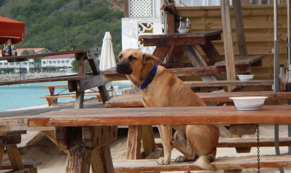 Dog on a picnic bench at the beach.