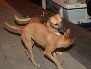 Pups at play