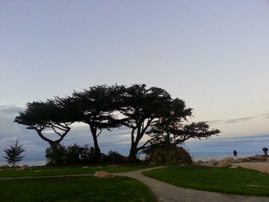 This gorgeous photo was taken on a lovely walk along the coast in Pacific Grove, on the Monterrey Bay Peninsula.