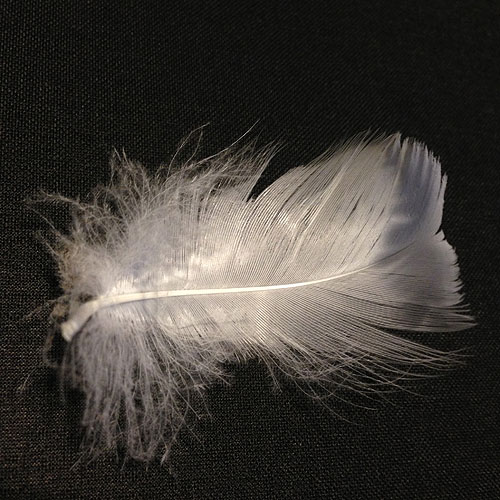 feather_sq_500
