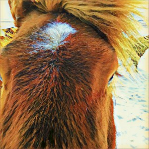 3 Poems and an Icelandic Horse [15 Words or Less]