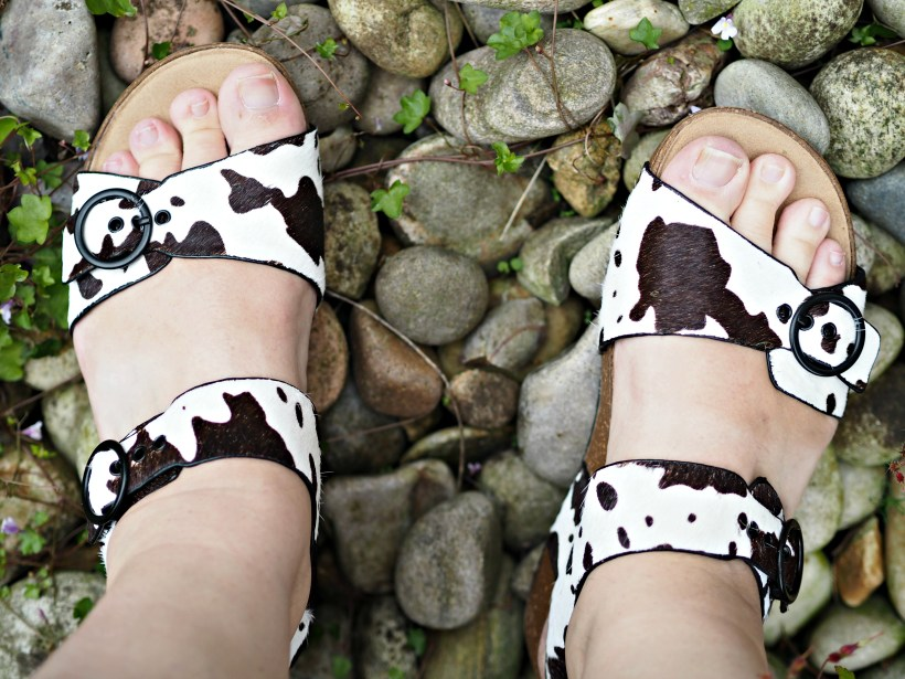 Hotter Tourist Cow print shoes me wearing them on pebbles
