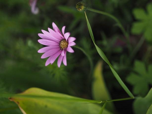 Lovely Gratitude - June 2019 Gratitude Challenge - picture of purple flower
