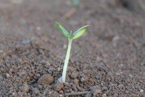 Realizzazione di sé.  Tu che seme sei?