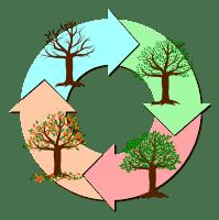 ciclicità stagionale
