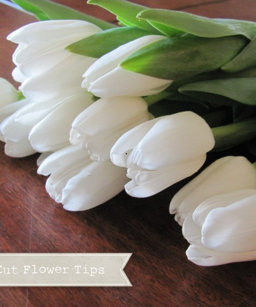 Fresh Cut Flower Tips with Tulips