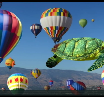 Happy Flying Turtle Video