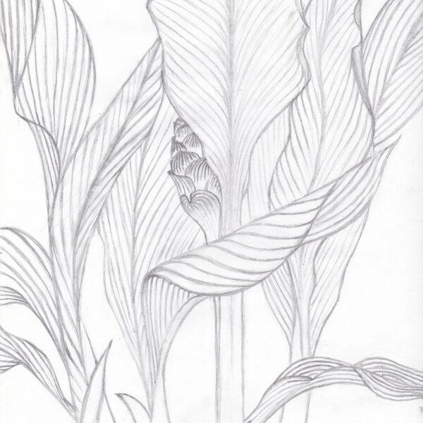 Pencil & Ink