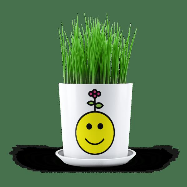 TVI Garden Planters Proposal