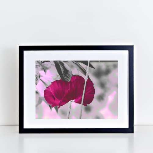 Pink Poppy Art Print - Lauren Skye Studio