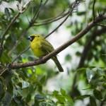 Bird in rainforest
