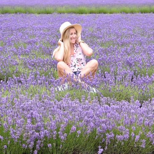 Lavender Fest
