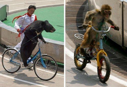 L'ours et le singe avant l'attaque