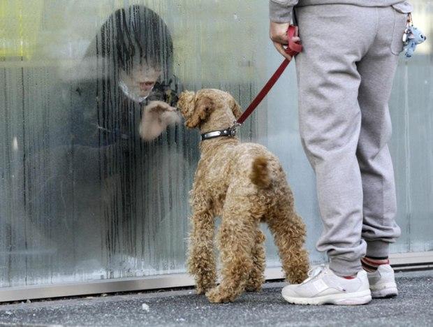 Une femme soumise à des radiations regarde son chien à travers une fenêtre à Nihonmatsu au Japon
