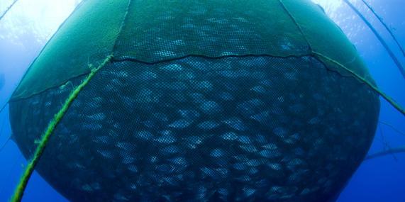 La sobrepesca, una seria amenaza para los océanos