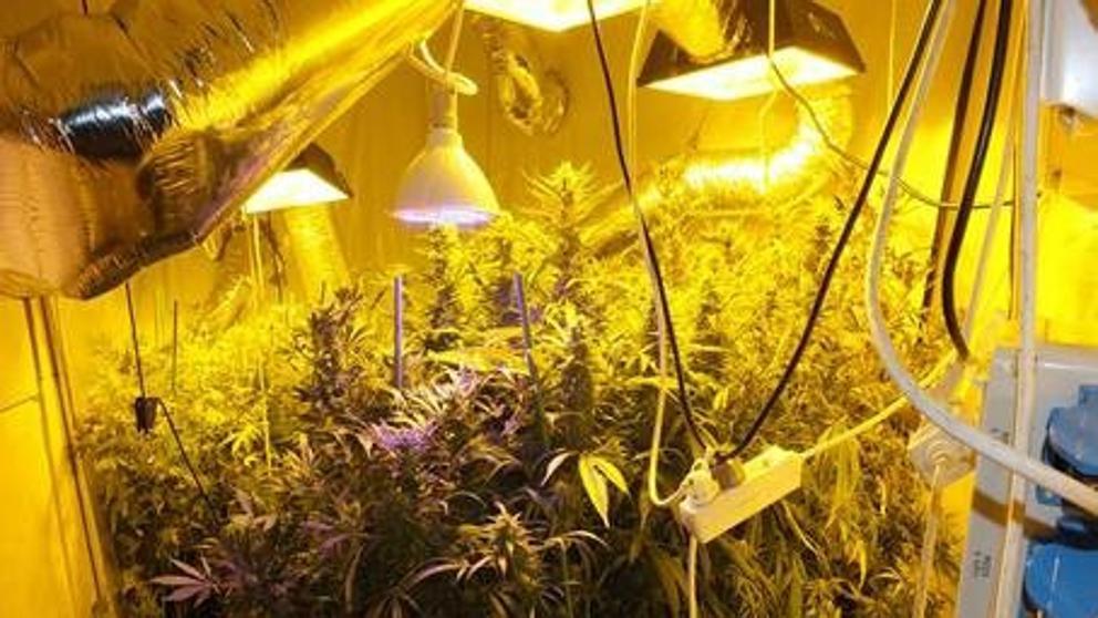 La Urbana acude por una fuga de agua y encuentra 200 plantas de marihuana en un piso de Poble Sec