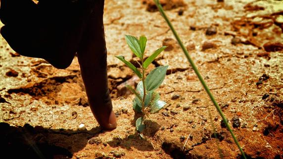 Así crece un pequeño arbol plantado en Burkina Faso gracias a ecosia.org | Facebook de Ecosia