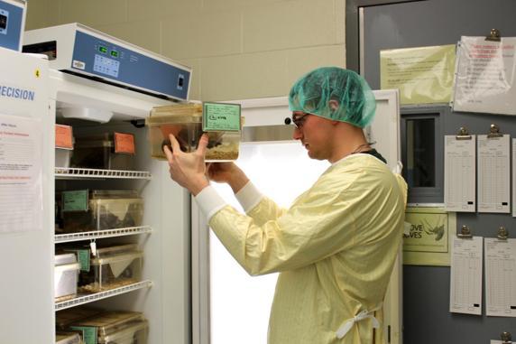 Un investigador comprueba un ratón de laboratorio en Instituto del Cáncer de Roswell Park (EE. UU.)