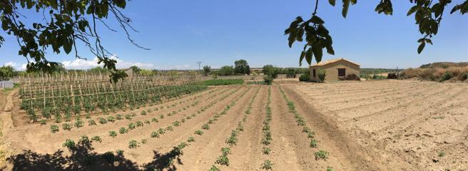 La plantación de Javier en Sesa, Huesca