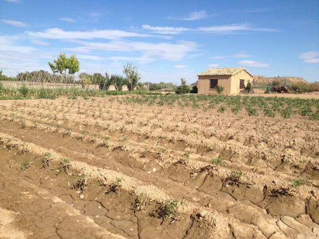 Este es el terreno de Huesca donde Javier tiene su plantación