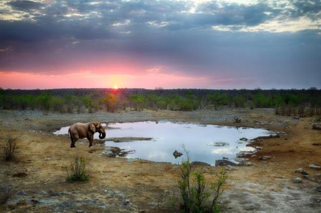 Elefantes en Etosha (Namibia)