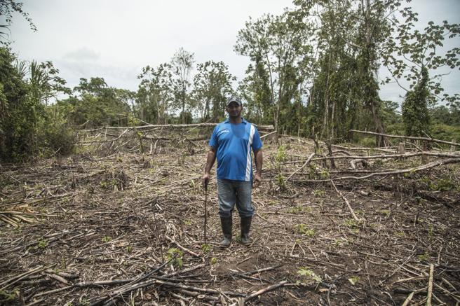 Johnny Rivas, maestro y campesino de Wampusirpi (La Muskitia) en el claro que ah abierto en el bosque tropical para plantar arroz. La tierra es tan fértil y húmeda que no necesita inundarla para que crezca el arroz