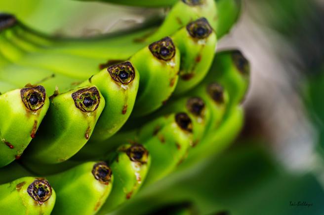 El triptófano, presente en el plátano, ayuda al organismo a sintetizar el neurotransmisor de la serotonina